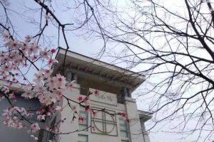 Spring in Nanjing Xiaozhuang University